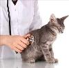 Ветеринарные клиники в Радужном